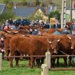 Le comice agricole du canton d'Allanche