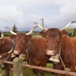 Le Comice agricole d'Allanche 2018 - v9