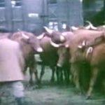 Foire d'Allanche 1959 – Georges Jalenques
