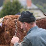 LAVA_YvesAufauvre_comice-agricole-Allanche-2019_08